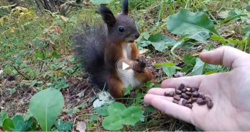 A squirrel malfunctions while eating nuts in the most 2020 mood